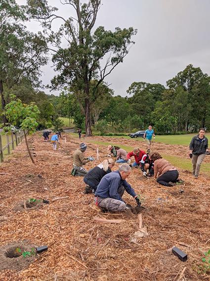Koala Supermarket planting
