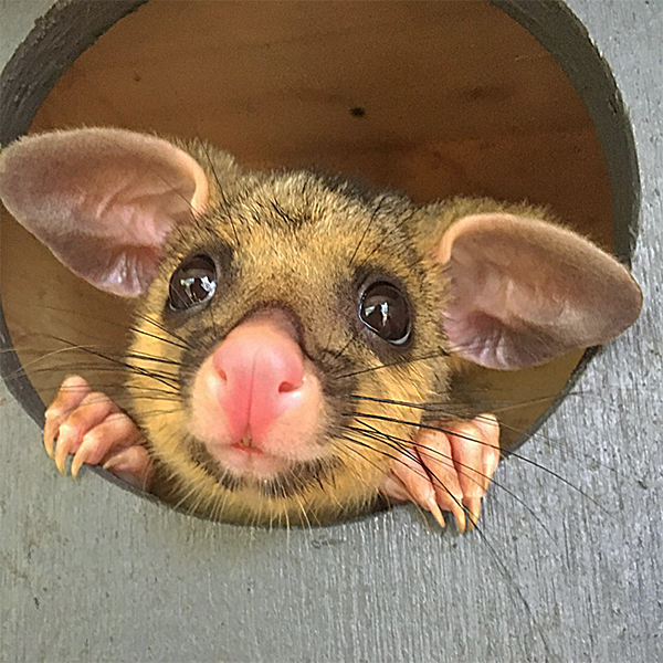 The Possum Pantry
