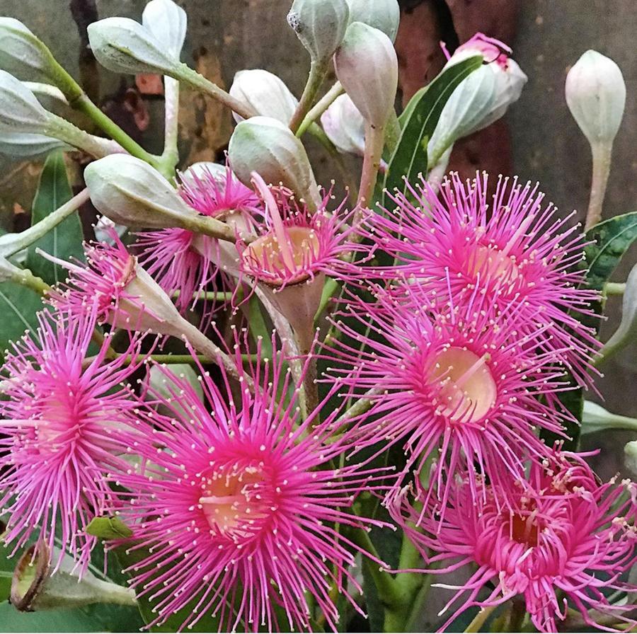 Blossoms fo possums