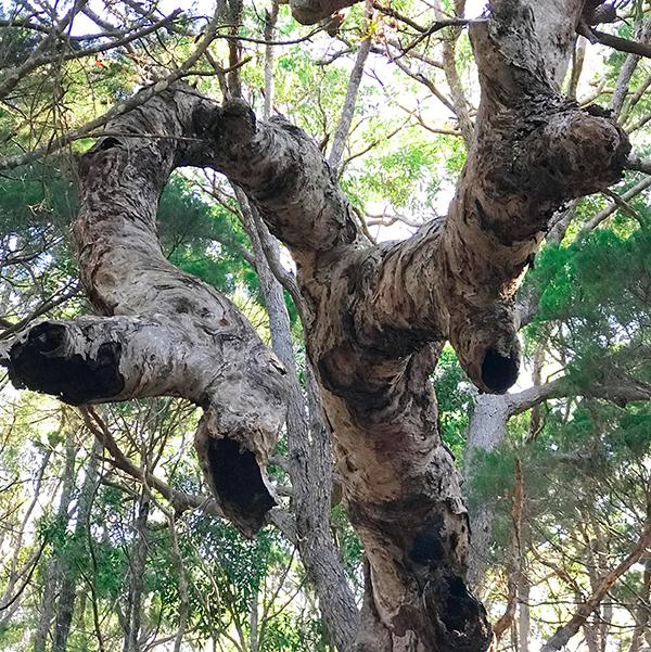 Tree hollows and wildlife