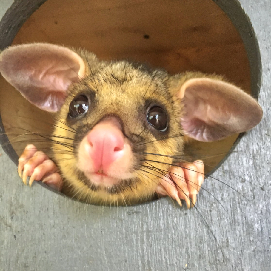 People coming together to help possums in care